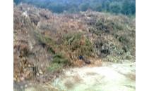 Recollida de 6m3 restes de poda i jardí.